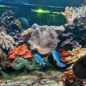 akvarijum1kg