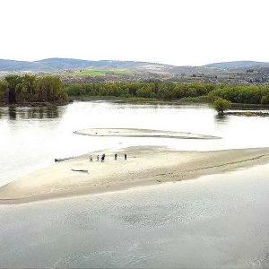 Dunav31